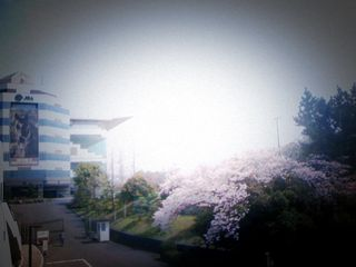 桜が迎える中京競馬場