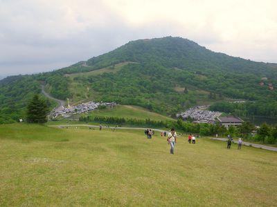 Shibazakura 034